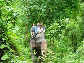 Jungle Safari to Khao sok by Elephant Hills