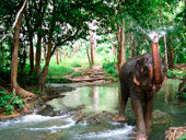 Elephant Trekking and River Camp by Nosey Parker's