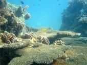 Coral Island (Koh Tan)