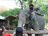 Half Day Mae Sa Elephant at work tour