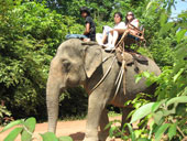 Full day Experience Elephant Ox Cart Bamboo Rafting