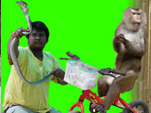 ATV Elephant trekking Monkey Show Snake_Show (5 Options)