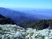 Doi Inthanon National Park - One Day tour