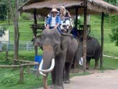 Lampang, Lampoon and Elephant Hospital